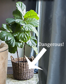 Potted Plant Dangerous